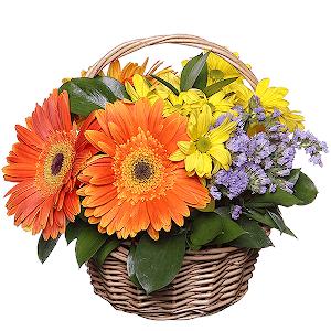 Заказать цветы недорого в москве, оптом закупки цветы волгоград фламинго