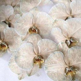 Орхидея — цветок любви и плодородия