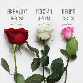 Чем отличаются розы разных сортов?
