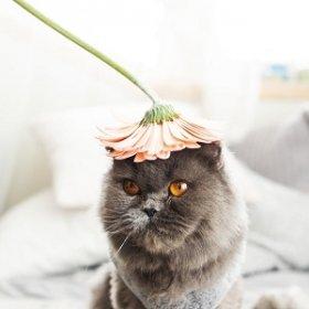 Какие цветы опасны для кошек?